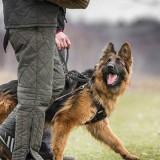 Что такое общий курс дрессировки собак, и для чего он нужен вашему питомцу?