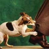 """Для чего нужно обучать собаку команде """"Фас""""? Описание тренировочного процесса"""