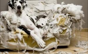 Что делать, если собака грызет вещи и мебель, как отучить ее это делать?