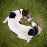 По каким причинам собака может крутится вокруг себя? Ответы в этой статье
