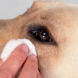 Какой раствор лучше всего подходит для промывки глаз собаке, и как это правильно делать?
