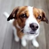 Как правильно выбрать имя для собак породы джек-рассел-терьер?