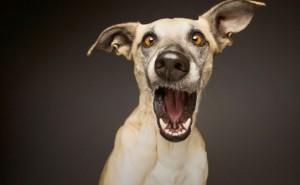 Причины появления икоты у собак, а также лечение этого явления