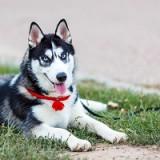 Список самых интересных и крутых кличек для собак породы хаски