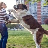 Почему собака прыгает на людей, и как отучить ее это делать?