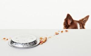 Насколько опасен гастроэнтерит и как нужно его лечить у собак?