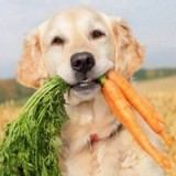Нужно ли давать собакам овощи, и как правильно вводить их в рацион животного?