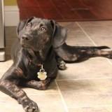 Возбудитель саркоптоза у собак, а также методы лечения болезни