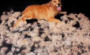 Почему у собаки после лечения грибка выпадает шерсть?
