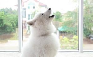 Какие патологии могут вызывать у собак скулеж, и как устранить эту проблему?