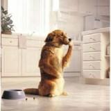 Почему собаку рвет после еды и о каких проблемах это говорит?