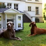 Какие собаки лучше всего справляются с охраной частного дома? Список пород и их характеристики