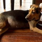 По каким причинам у собаки может быть вздутие живота и как ей можно помочь в домашних условиях?