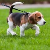 Необходимые упражнения и команды для приучения собаки к ошейнику и поводку