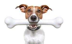 Почему не стоит давать собаке куриные кости и чем их можно заменить?