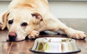 Симптомы колита у собак, а также методы его лечения