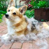 Что такое линька у собак, и как правильно ухаживать за питомцем в этот период?