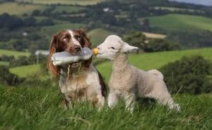 Пути заражения бруцеллезом у собак, а также методы его лечения