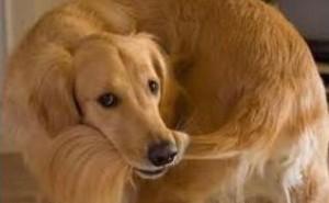 По каким причинам собака может грызть свой хвост и как устранить эту проблему?