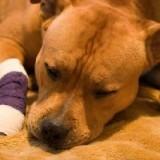 Что делать если у собаки артроз, как за ней ухаживать и чем кормить?
