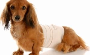 Насколько опасен артрит у собак и как можно его выявить?