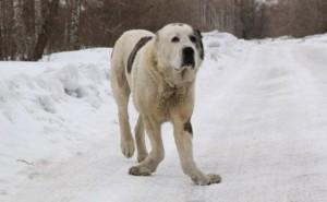 Причины развития рахита у собак, и как уберечь своего питомца от этой патологии?