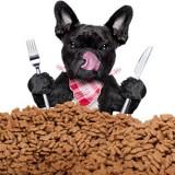Подробный рацион питания французского бульдога и рекомендации для аллергиков