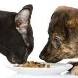 Что будет, если собака съест кошачий корм, сможет ли он полноценно заменить собачий?