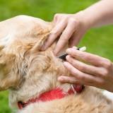 Насколько опасен боррелиоз для собак, и как спасти больного питомца?