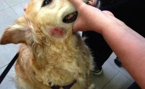 Что такое мокнущая экзема у собак и по каким причинам она возникает у животных?