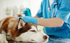 Можно ли ревакцинировать собаку вакциной другой марки?