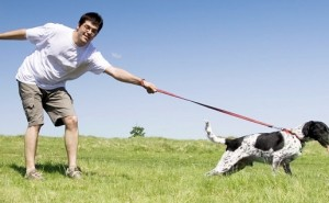 Какие методы и хитрости помогут отучить собаку тянуть поводок во время прогулки?