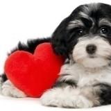 По какой причине у собаки может случиться инсульт и как оказать ей первую помощь?