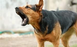 Методы, которые помогут успокоить собаку в перевозбужденном состоянии