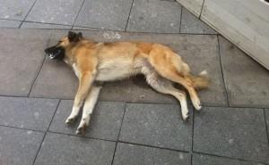 Что делать, если у собаки начались судороги? Первая помощь поэтапно