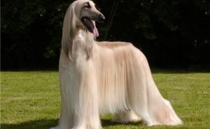Какие витамины нужно давать собаке, чтобы у нее не выпадала шерсть?