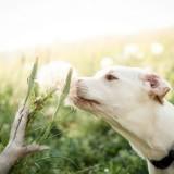 Причины аллергии у собак и как правильно ее лечить?