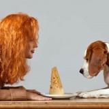 Польза и вред сыра для собак, а также правила кормления этим продуктом