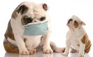 Как уберечь своего питомца от коронавируса и как его лечить в случаи заболевания?