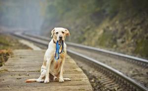 Что делать, если убежала собака, как ее можно найти?