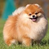 """15 самых пушистых пород собак для любителей """"пушистиков"""""""