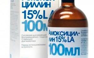 Подробный обзор антибиотика для собак Амоксициллин. Когда его можно применять, а когда не стоит?