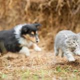 По каким причинам собаки не любят кошек, и что с этим делать?