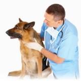 Нужно ли стерилизовать собаку? Все преимущества и недостатки процедуры