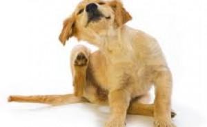 По каким причинам собака может грызть себя, если у нее нет блох и как ей помочь?