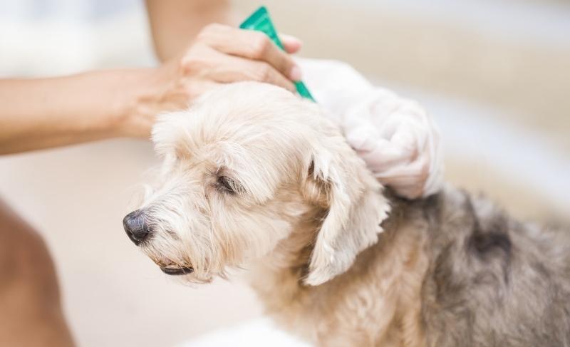 Как правильно наносить капли на холку собаке?