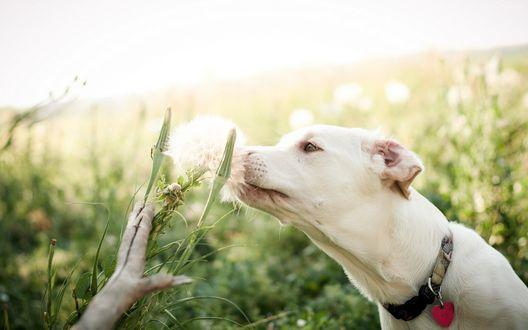 Какие таблетки давать собаке от аллергии