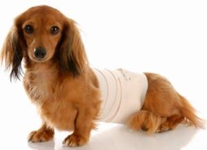 Артрит у собак лечение препараты