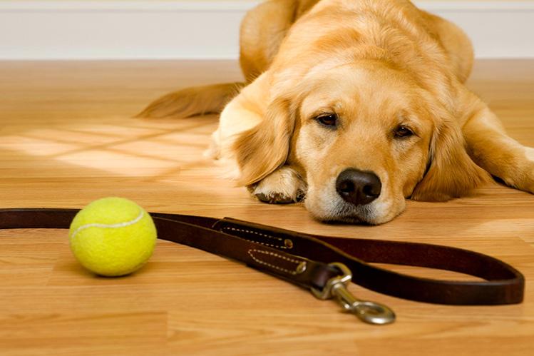 Причины аллергии у собак