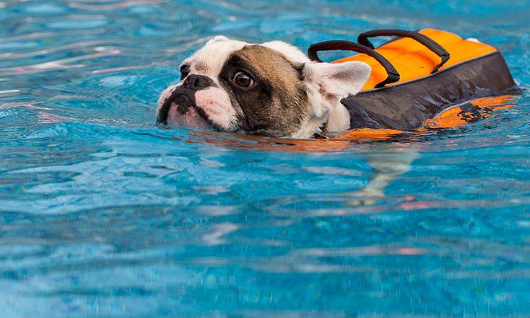Упражнения для собак с артрозом